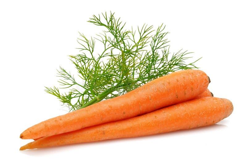 Verse wortelen en groene dille royalty-vrije stock afbeelding