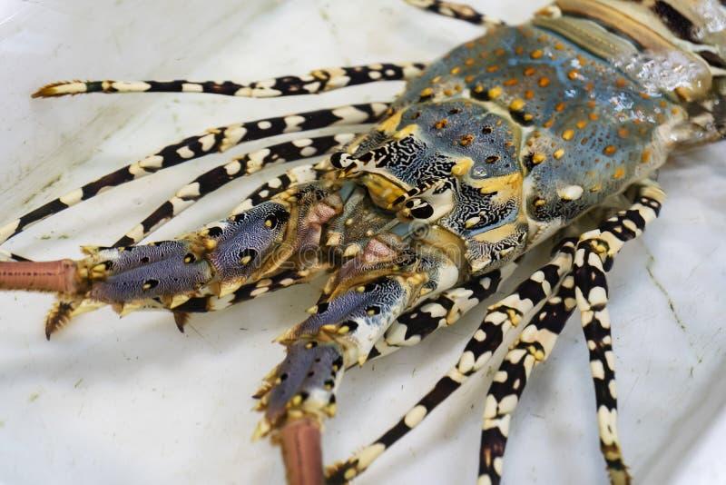 Verse zeekreeft nog levend in de vissenmarkt dichtbij het overzees royalty-vrije stock afbeeldingen