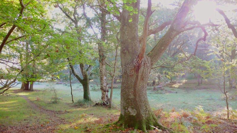 Versión colorida de la mañana brumosa del bosque fotos de archivo
