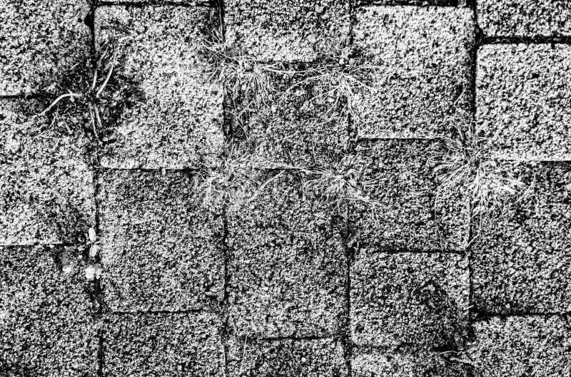Versión de cierre de la ruta de senda de senda de senda de trenzado imagenes de archivo