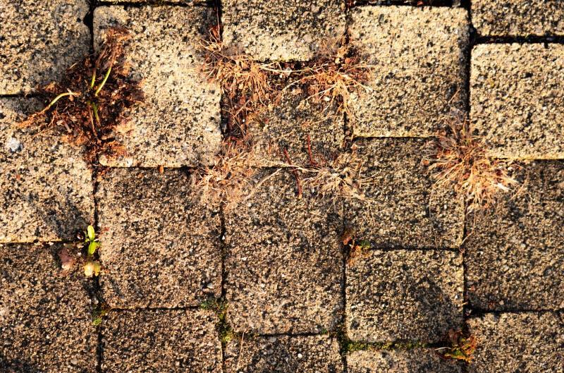 Versión de cierre de la ruta de senda de senda de senda de trenzado fotografía de archivo libre de regalías