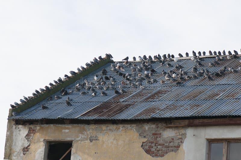 Verslechterd dak stock fotografie