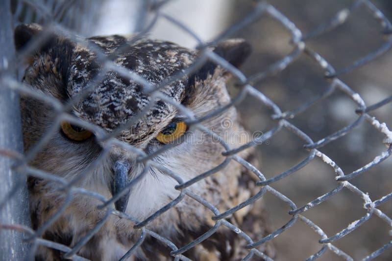 Versperde Eagle-Uil in de dierentuin Selectieve nadruk royalty-vrije stock afbeelding