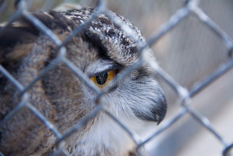 Versperde Eagle-Uil in de dierentuin Selectieve nadruk stock foto's
