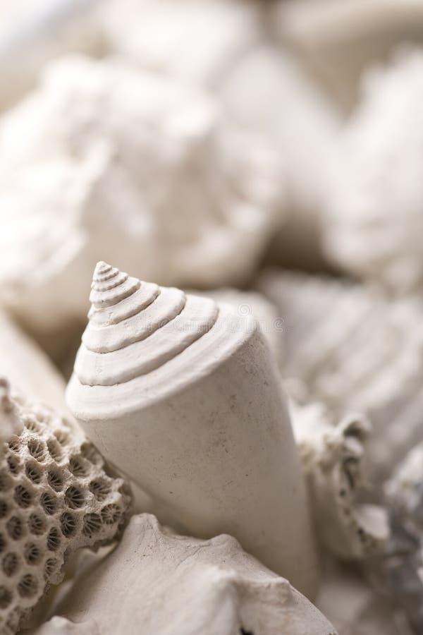 Verstarde shell achtergrond stock foto