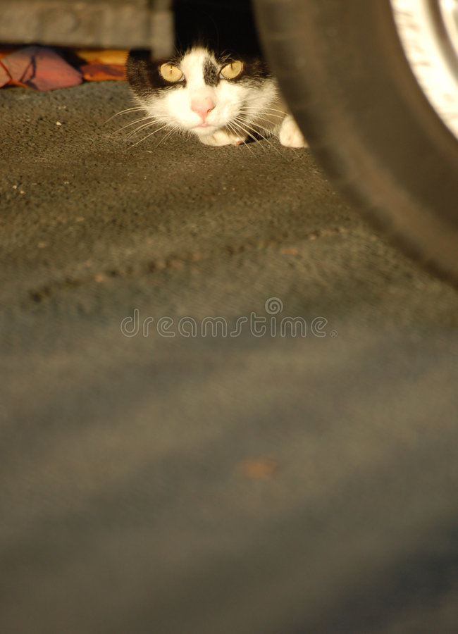 Versteckende Katze stockfoto