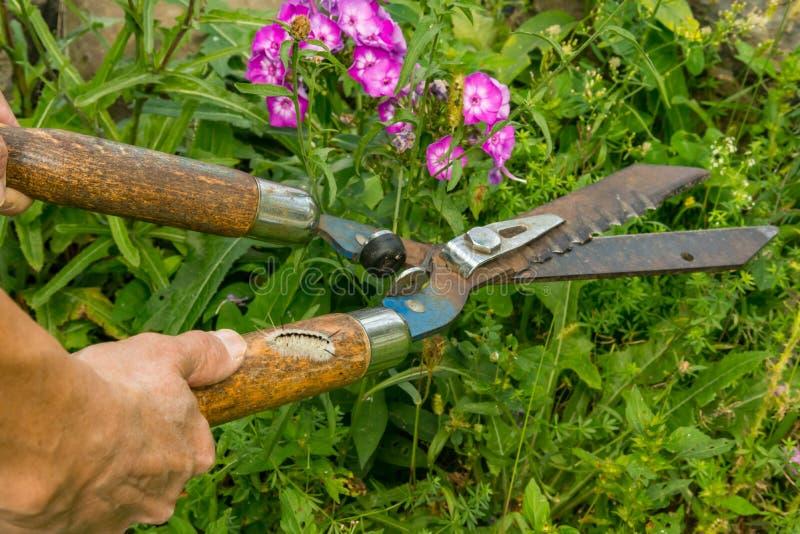 Versteckte Gefahren der Gartenarbeit stockbilder