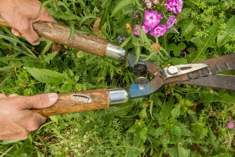 Versteckte Gefahren der Gartenarbeit lizenzfreie stockfotografie