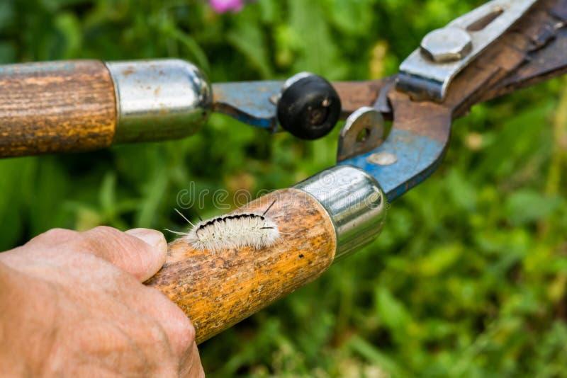 Versteckte Gefahren der Gartenarbeit stockfotos