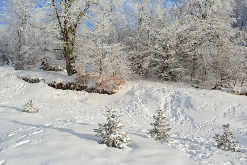 Versteckte schneebedeckte Straße außer dem Wald stockfotografie