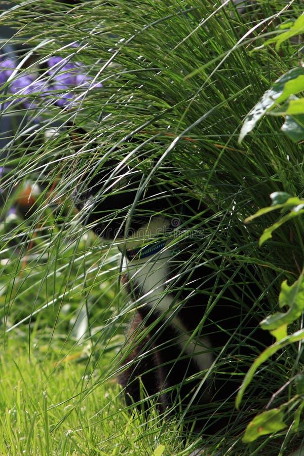 Versteckte Schwarzweiss-Katze stockfotos