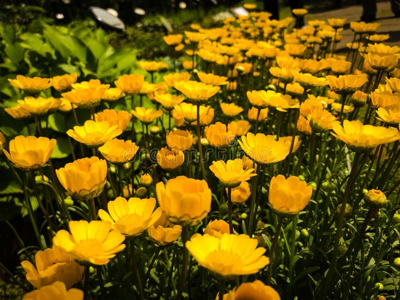 Versteckter japanischer Blumen-Garten stockbild