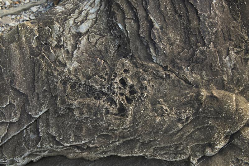 Versteinerte Felsen an versteinerten Klippen Joggins, Nova Scotia, Kanada stockbild