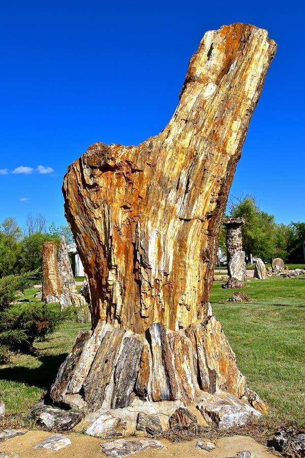Versteinerter Felsen gebildet von einem Baumstamm stockfotografie