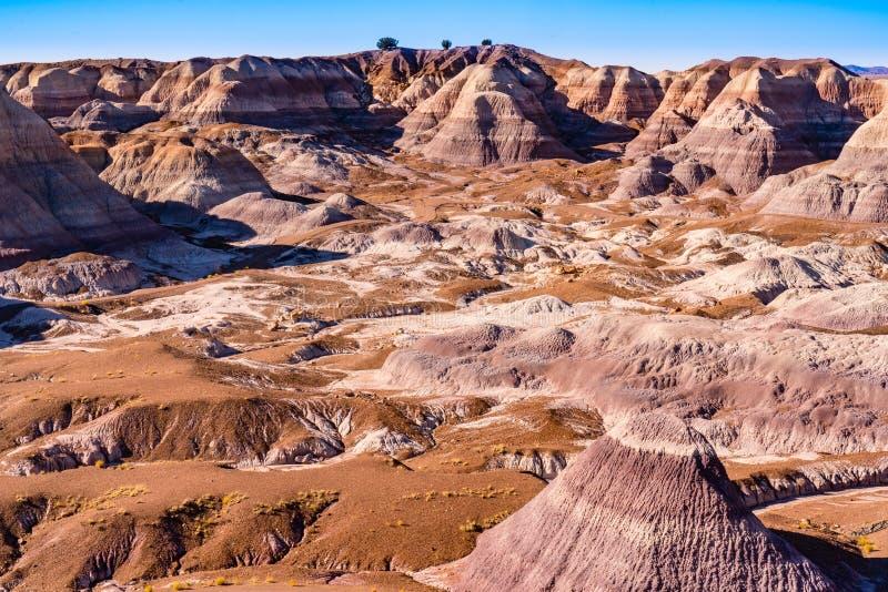 Versteinerter Forest National Park lizenzfreies stockbild