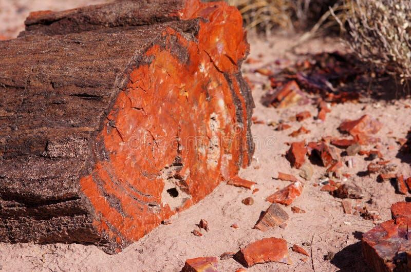 Versteinerter Wald, Arizona, USA lizenzfreie stockfotos