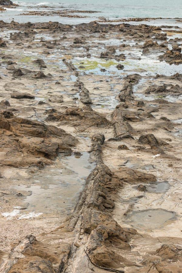 Versteinerter Wald in der Kuriositäts-Bucht stockfotografie