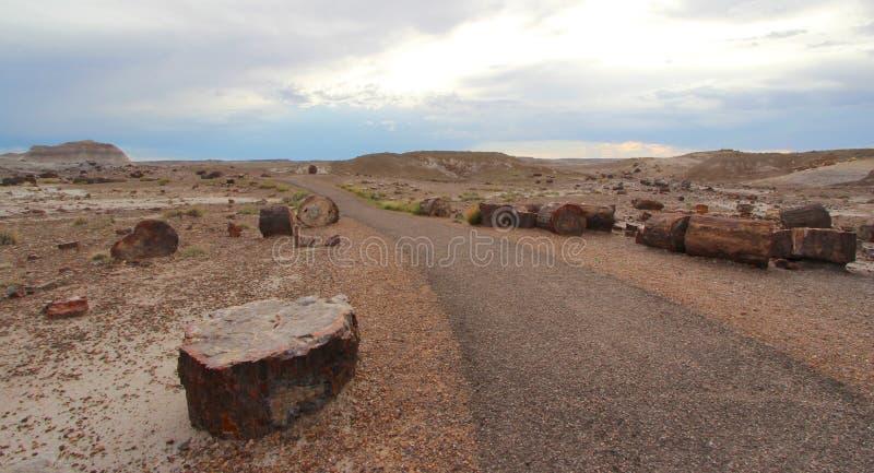 Versteinertes Holz entlang Crystal Forest-Wanderweg in versteinertem Forest National Park, Arizona, USA lizenzfreies stockfoto