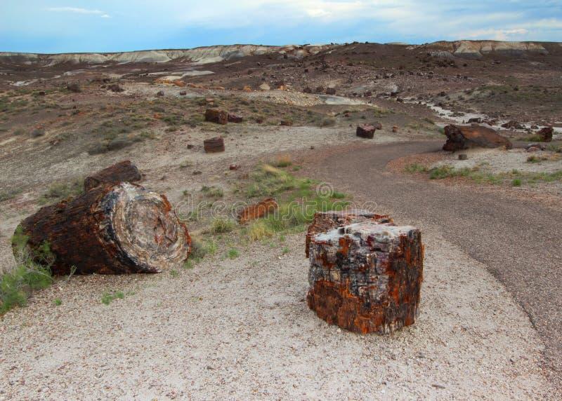 Versteinertes Holz entlang dem gepflasterten Crystal Forest-Wanderweg in versteinertem Forest National Park, Arizona, USA lizenzfreies stockfoto