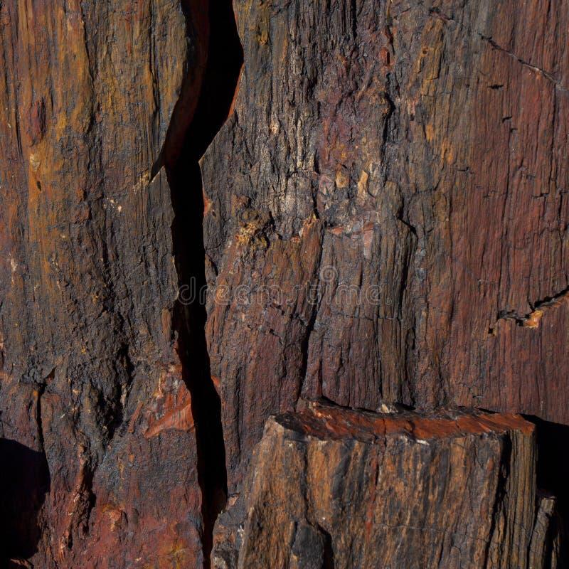 Verstijfd van angst hout stock fotografie