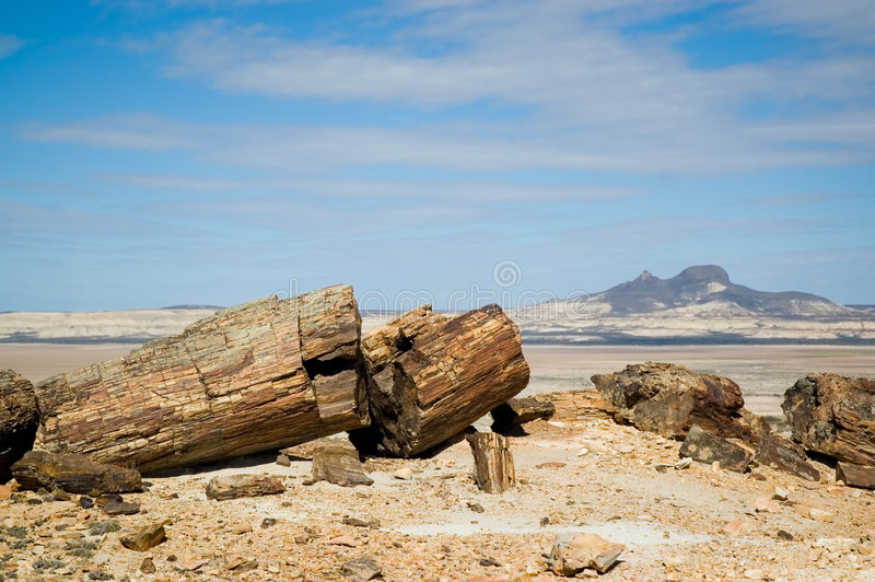 Verstijfd van angst hout in Patagonië. stock foto