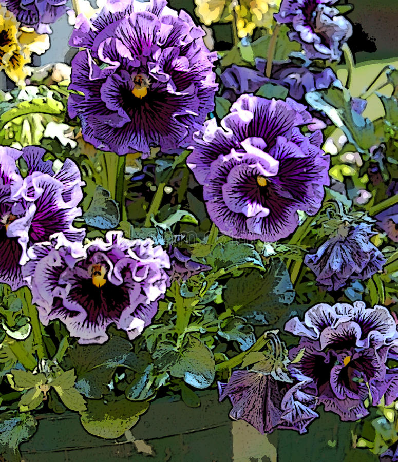 Verstoord Purple pansies royalty-vrije stock fotografie