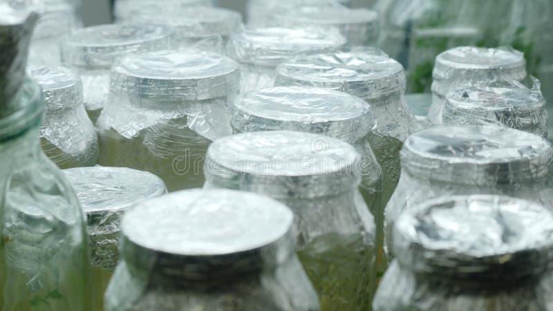 Versuchsanlagen in den Glasgefäßen im Labor Proben von Anlagen im Glas Erhalt von einzigartigen Spezies von Anlagen stockbild