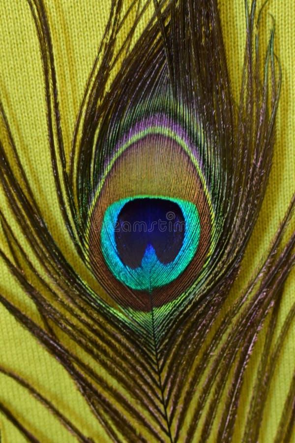 Vert affectueux de sur de paon de plume, plume de paon sur le fond vert, verde de fundo de pena de pavão em photo stock
