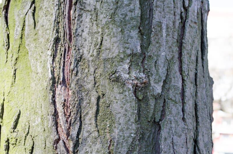 Vert Arbre Écorce en bois E nature r Texture en bois Textures normales Fond Backgrou en bois images stock