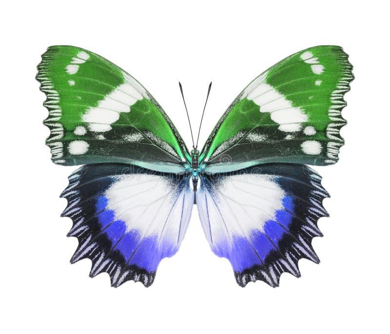 Vert bleu de papillon image libre de droits