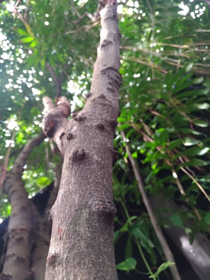 Vert d'arbre photo stock