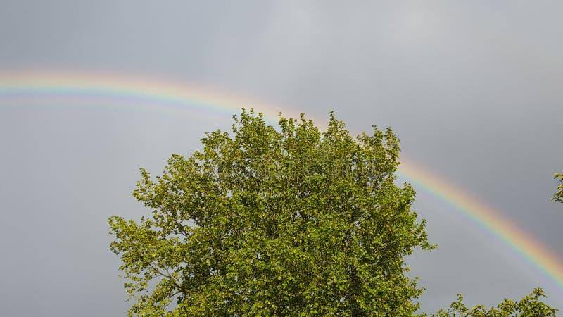 Vert d'arc-en-ciel d'arbre photographie stock