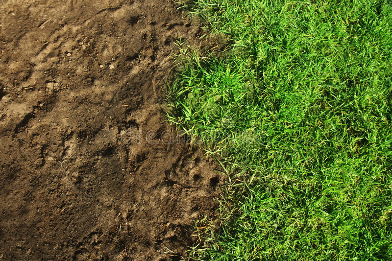 vert d'herbe photo stock
