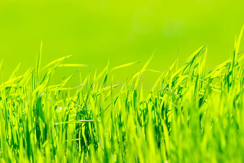 vert d'herbe de fond photos stock