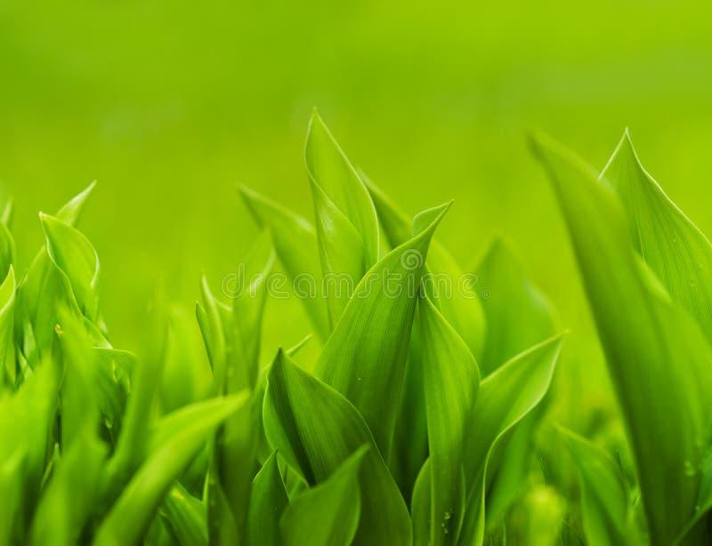 vert d'herbe frais image libre de droits