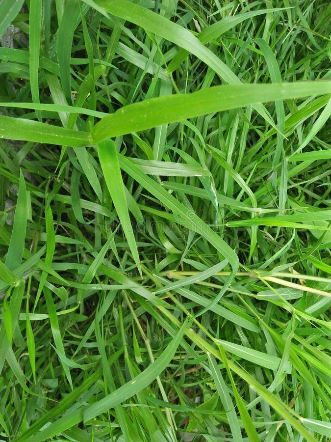 Vert d'herbes image libre de droits