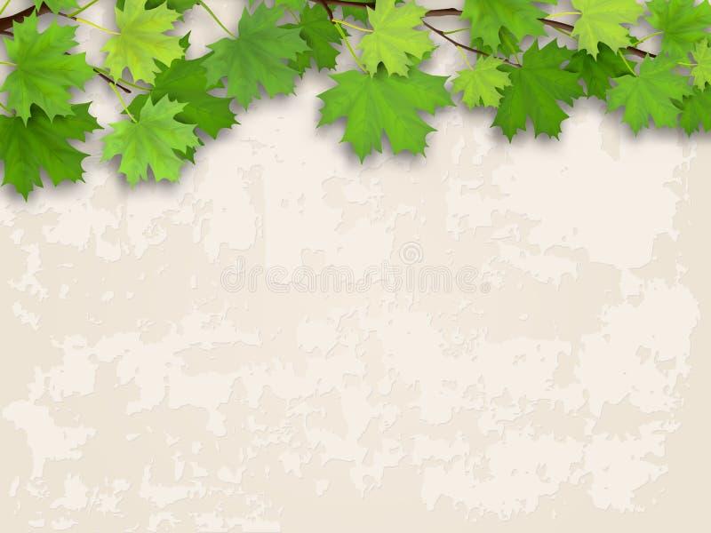 Vert de branche d'arbre d'érable sur le vieux fond de mur illustration stock