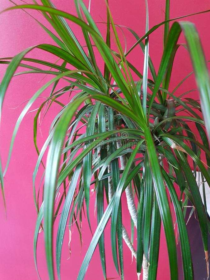 Vert de flore de nature d'usine de planète image libre de droits