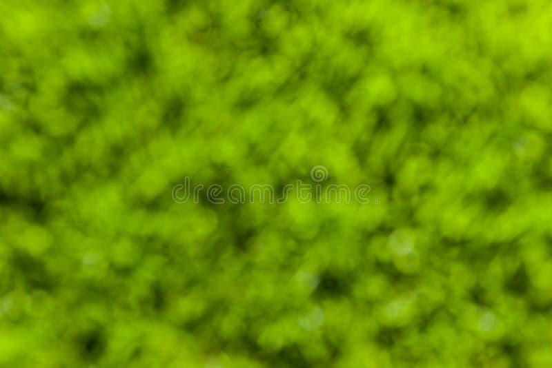 Vert de fond photo stock