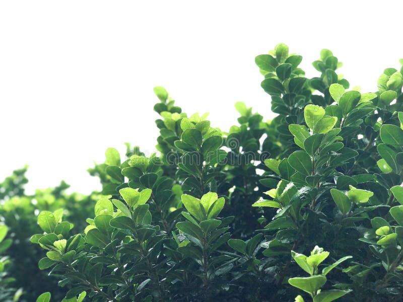 Vert de fond images libres de droits