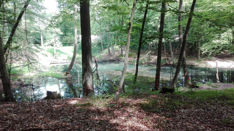Vert de l'eau d'arbre photographie stock