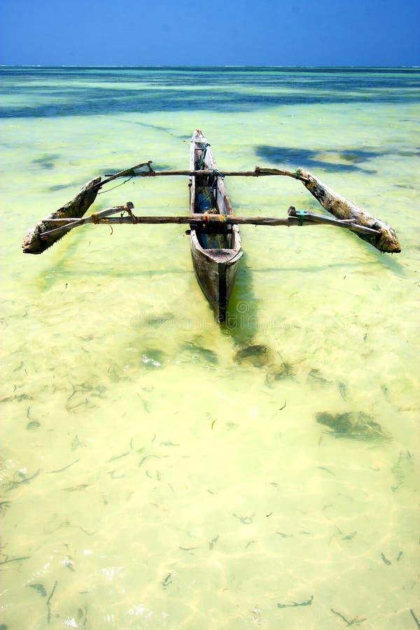 vert de l'Océan Indien d'algue de plage de Zanzibar photo libre de droits