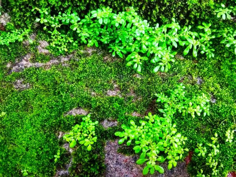 Vert de mousse qui est moite image stock