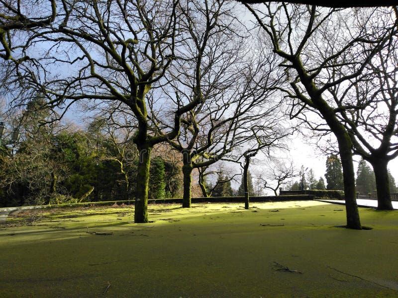 Vert de plancher avec des arbres image stock
