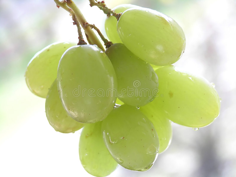 Download Vert de raisins image stock. Image du alcool, petit, raisins - 8671447