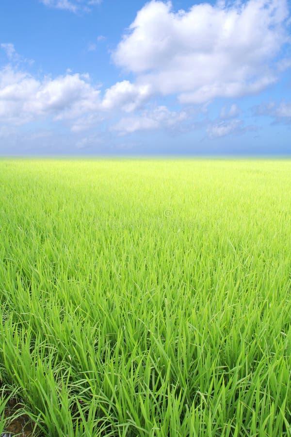 vert de zone images libres de droits