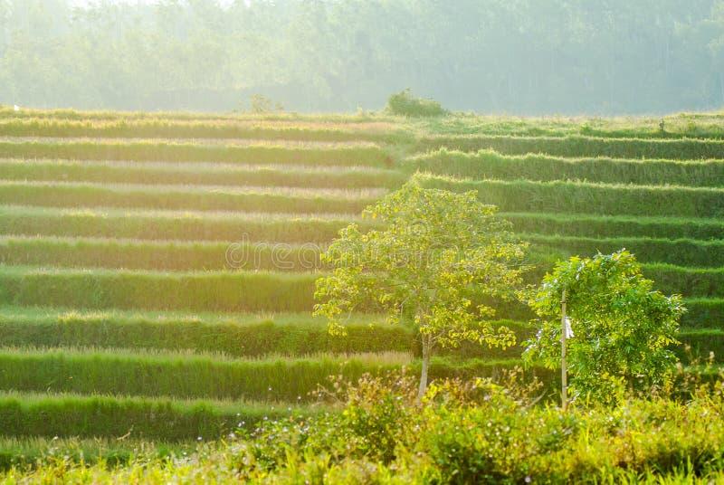Vert dedans à la lumière du soleil d'or photos libres de droits