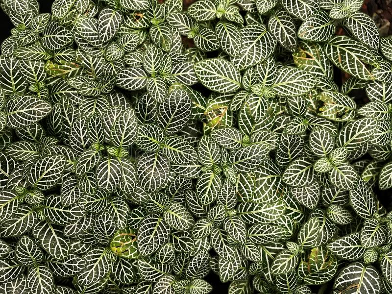 Vert et blanc laisse le fond, textures naturelles, photographie stock libre de droits