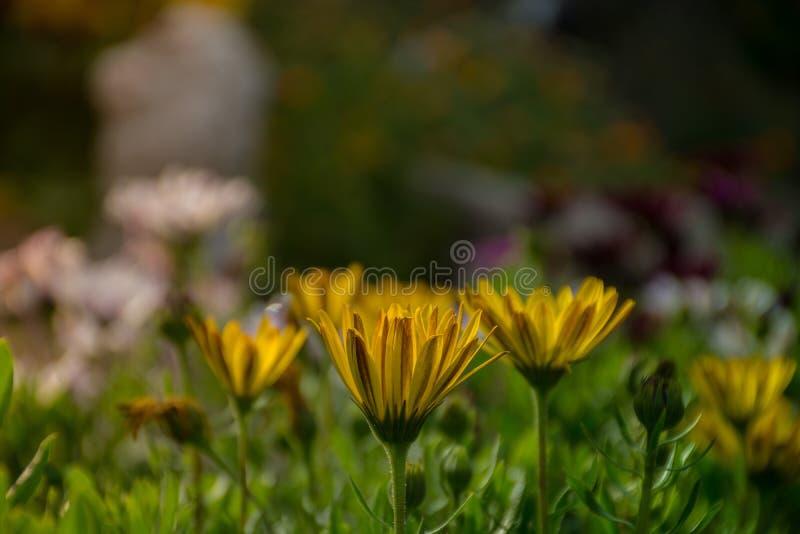 Vert et jaune photo stock