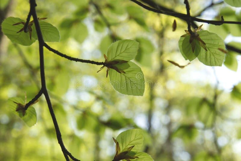 Vert frais photo stock